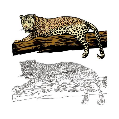 Leopard on Log